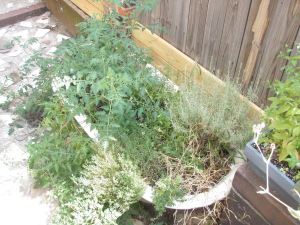 bathtub herb garden